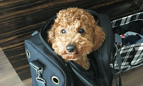 愛犬のモナ