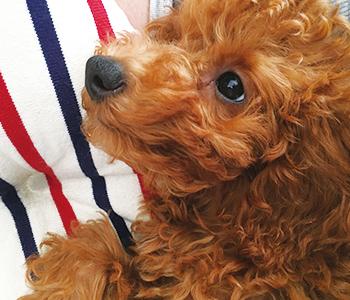 愛犬モナの画像